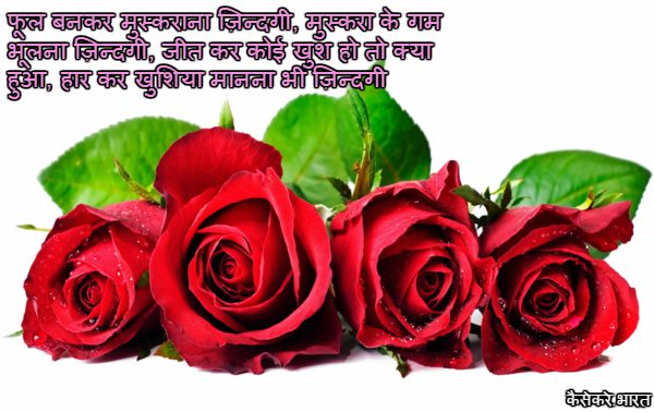 rose day images hd